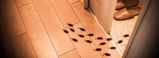 Cosa fare per tenere lontani dalla nostra casa gli insetti
