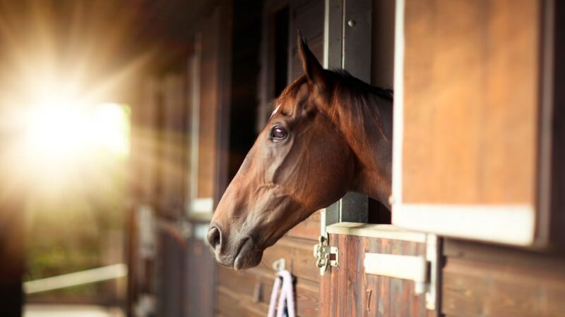Ospitare il proprio cavallo in un box